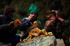 himalayan honey hunters | article-0-1C6B3C8C00000578-18_964x638.jpg