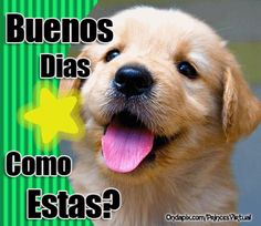 imagenes de perros con mensajes bonitos