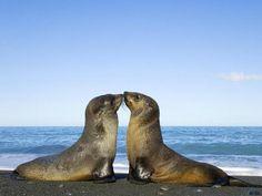 Seal Kiss <3