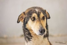 dogs shelter - Egypt  pets in frames photography  #facebookpage