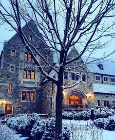From our friends at Boston College  @bostoncollege - Winter wonderland || Photo by @claudia_disomma  #BC360 #goviewyou