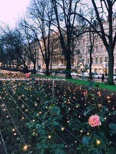 ※ Helsinki ❤️ the place where roses bloom in winter. Unbelievable! The most beautiful flower bushes, always, regardless of the weather 🌹 ※
