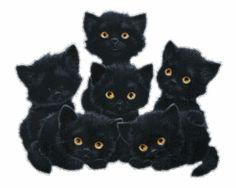 cute - black-cats fã Art