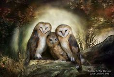 Three Owl Moon is from the 'Beauty In Nature' collection of original wildlife art by Carol Cavalaris. Three sweet barn owls nestle together in the glow of a big full moon. Owl Canvas, Canvas Prints, Art Prints, Wicca, Magick, Pagan, Owl Moon, Creation Photo, Thing 1