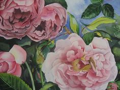 i love Roses  Constance Spry  Watercolor Stephanie Zobrist