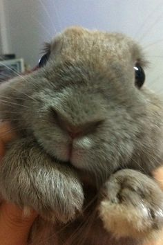 sweet bunny face...so gentle