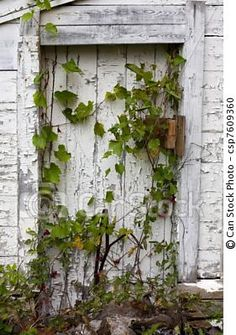 Vine Covered Wood Door with Chipped Paint
