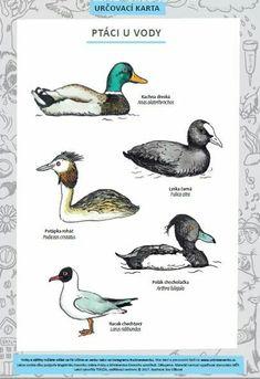 Pond Life, Name Art, Teaching Kindergarten, Crafts For Kids, Homeschool, Birds, Education, Retro, Learning