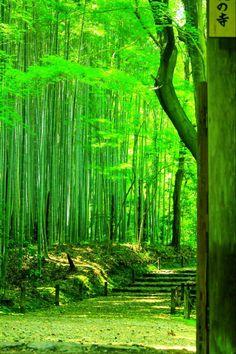 "lifeisverybeautiful: "" Banboo Temple, Kyoto, Japan via αcafe My Sony Club """