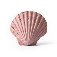 Shell Object - Blush Pink