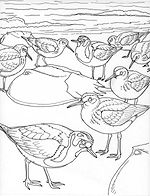 Free bird coloring pages from the Smithsonian National Zoo.