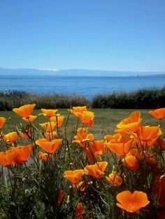 (*) Twitter Travel Deals, Canada, Twitter, Pretty, Flowers, Gardens, Victoria, Outdoor, Outdoors