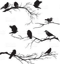 Black Silhouette Crows Perched on Branches of Various Lengths vector art illustration Vogel Silhouette, Crow Silhouette, Silhouette Tattoos, Black Silhouette, Silhouette Images, Bird Stencil, Branch Tattoo, Bare Tree, Bird Illustration