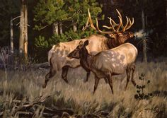 Elk Pictures, Whitetail Deer Pictures, Bull Elk, Cowboy Art, Animals And Pets, Wild Animals, Wildlife Art, Painting Inspiration, Moose Art