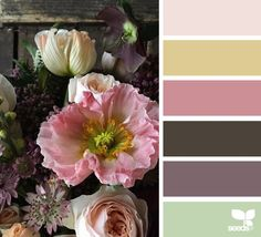 flora hues | design seeds | Bloglovin'