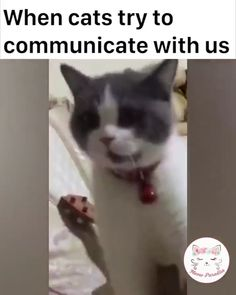 Entertaining the kittens Source by videos wallpaper cat cat memes cat videos cat memes cat quotes cats cats pictures cats videos Funny Animal Memes, Funny Animal Videos, Cute Funny Animals, Funny Animal Pictures, Cute Baby Animals, Cat Memes, Funny Cute, Cute Cats, I Love Cats