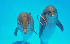 #dolphins