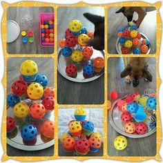 Dog Treat Toys, Diy Dog Toys, Brain Games For Dogs, Dog Games, Dog Boredom, Dog Enrichment, Dog Yard, Dog Puzzles, Dog Hotel