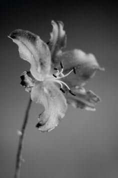 Black and white photography: take control of conversion