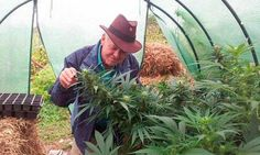 """Rick Simpson : """"My intention is to destroy the pharmaceutical industry"""" - Best Seed Bank"""