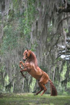 Chestnut Horse In The Woods All The Pretty Horses, Beautiful Horses, Animals Beautiful, Cute Animals, Majestic Horse, Majestic Animals, Horse Photos, Horse Pictures, Zebras