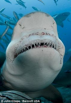 Say Cheese: The shark bears its terrifying row of teeth. Recommended by www.fishinglondon.co.uk