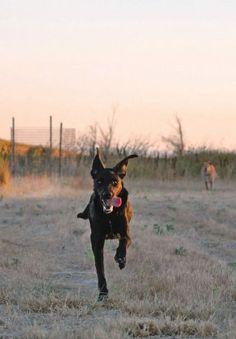 Rocket Recall - Whole Dog Journal Article