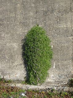 a plant growing out of a hole in a concrete wall