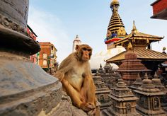 Explore Swayambhunath, aptly  nicknamed the Monkey Temple, on the outskirts of Kathmandu. We've got more suggestions for a 24-hour jaunt to Nepal's vibrant capital.