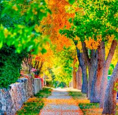 Nice suburban neighborhood in early autumn . Studio Background Images, Background Images For Editing, Black Background Images, Photo Background Images, Background Images Wallpapers, Photo Backgrounds, Nature Images, Nature Pictures, Beautiful Landscapes