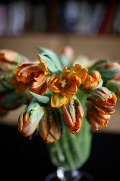 flowers a-z: i is for irene parrot tulips | Design*Sponge