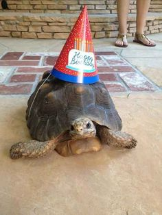 Be as chill as this birthday tortoise.