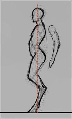 fawn anatomy