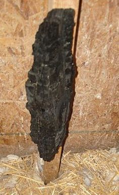 A piece of charcoal attached to the wall inside a coop can give your poultry access to a natural substance that will help absorb toxins and help to keep the digestive system in balance. chickens,Farm and garden,Farm Frie Chicken Coup, Chicken Lady, Chicken Eggs, Chicken Fence, Chicken Wire, Keeping Chickens, Raising Chickens, Backyard Farming, Chickens Backyard