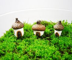 Acorns - Tiny gnome homes