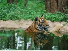 Wildlife preserved in their natural setting and living in harmony with nature at Bannerghatta National Park.