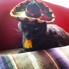 Melissa Balter Designs Inspiration - Happy Cinco de Mayo!  Growing up in California, our culture is so rich with Mexican heritage and all the beautiful colors that come with it. My Stella is showing off her spirit in her sombrero, perched upon one of my antique serapes.  I have used serapes as upholstery, pillows, and even curtains!  Viva la!  #interiordesign #melissabalterdesigns #interiors #decor #lifestyle #home #california #color