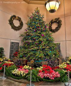 U.S. Botanic Garden Christmas Tree