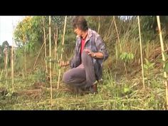 7 Food Forests in 7 Minutes with Geoff Lawton... This is just AWESOME!  Love it!  It's definitely on my list for a self-sufficient life!