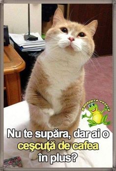 Cat Art, Animals And Pets, Red Roses, Good Morning, My Photos, Harry Potter, Humor, Memes, Cats