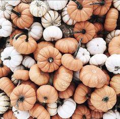 halloween aesthetic - Fall Outfits All Hello Autumn, Autumn Day, Autumn Leaves, Winter, Autumn Harvest, Bild Gold, Hallowen Ideas, Halloween Decorations, Autumn Aesthetic