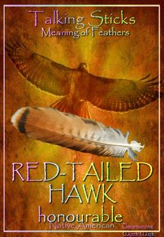 Talking Sticks / Meaning Of Feathers - Red-Tailed Hawk Feather Symbolism, Feather Meaning, Animal Symbolism, Spirit Animal Totem, Animal Spirit Guides, Talking Sticks, Magic Theme, Spiritual Animal, Feathers