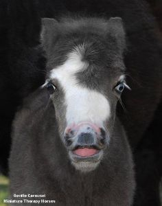 Name the Filly...photo by Gentle Carousel Miniature Therapy Horses  www.facebook.com/cowboymagic