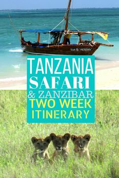 Want to go on an #African safari in #Tanzania, and also spend time in tropical #Zanzibar? Check out what to do there with 2 weeks! Arusha, Serengeti, Lake Manyara, Moshi, Stone Town, Matemwe
