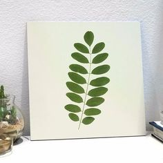 placa acácia leaf