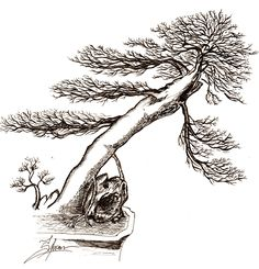 my bonsai sketch for t-shirt our bonsai community, PBM Penggemar Bonsai Magelang Indonesia