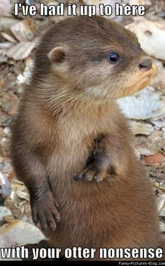 Ive had it up to here with your otter nonsense! MEME, Funny Pictures and LOL