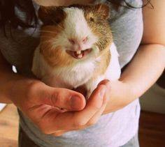 Happy Guinea Pig :)