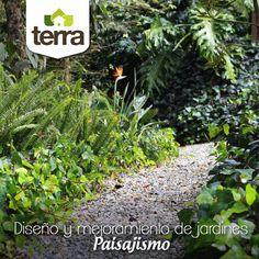 El #paisajismo es arte y ciencia y requiere de habilidades de diseño, así como planificación, creatividad, organización e imaginación. Por eso en #TerraPyJ te asesoramos en la renovación o diseño de tu jardín, nos encargamos de los materiales y la consecución del proyecto con proveedores de materiales y plantas de la zona.