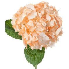 orange cream yum ❤ liked on Polyvore
